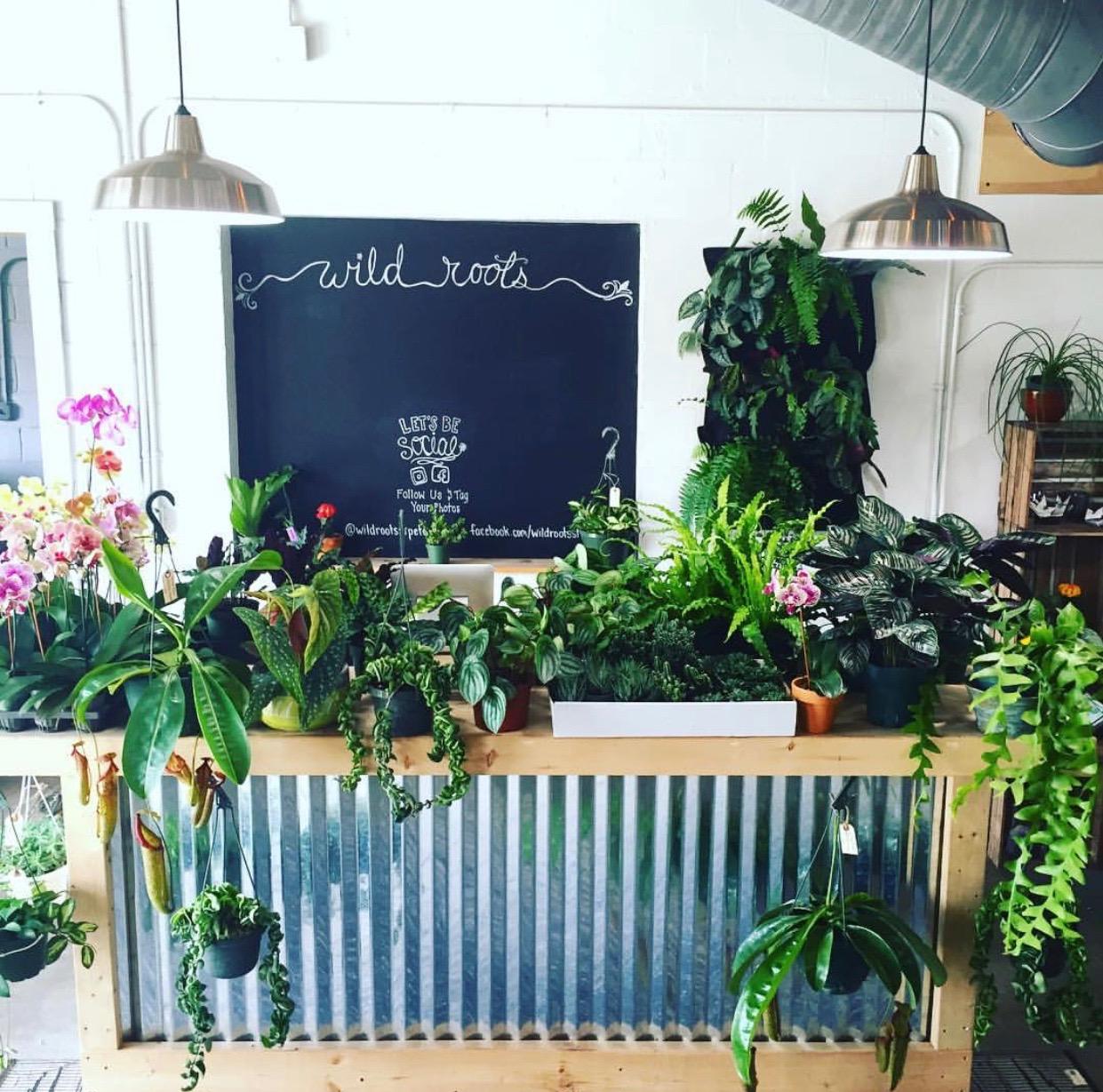 Wild Roots. Photo of Store Interior!  Instagram , wildrootsstpete