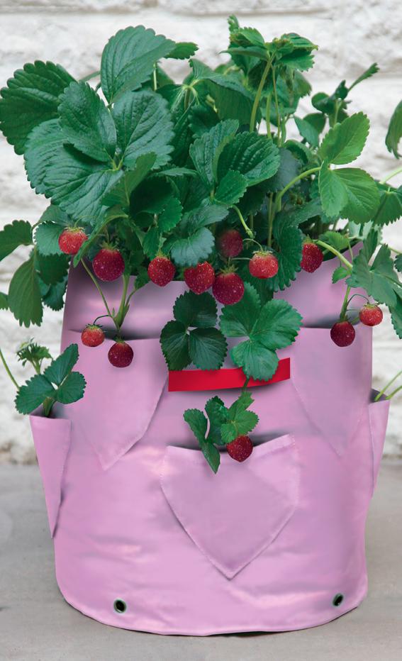 Strawberry & Herb Patio Planter (2).jpg