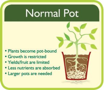 Normal Pot Root System.jpg