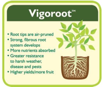 Haxnicks Vigoroot Root System.jpg