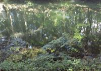 pond-2.jpg