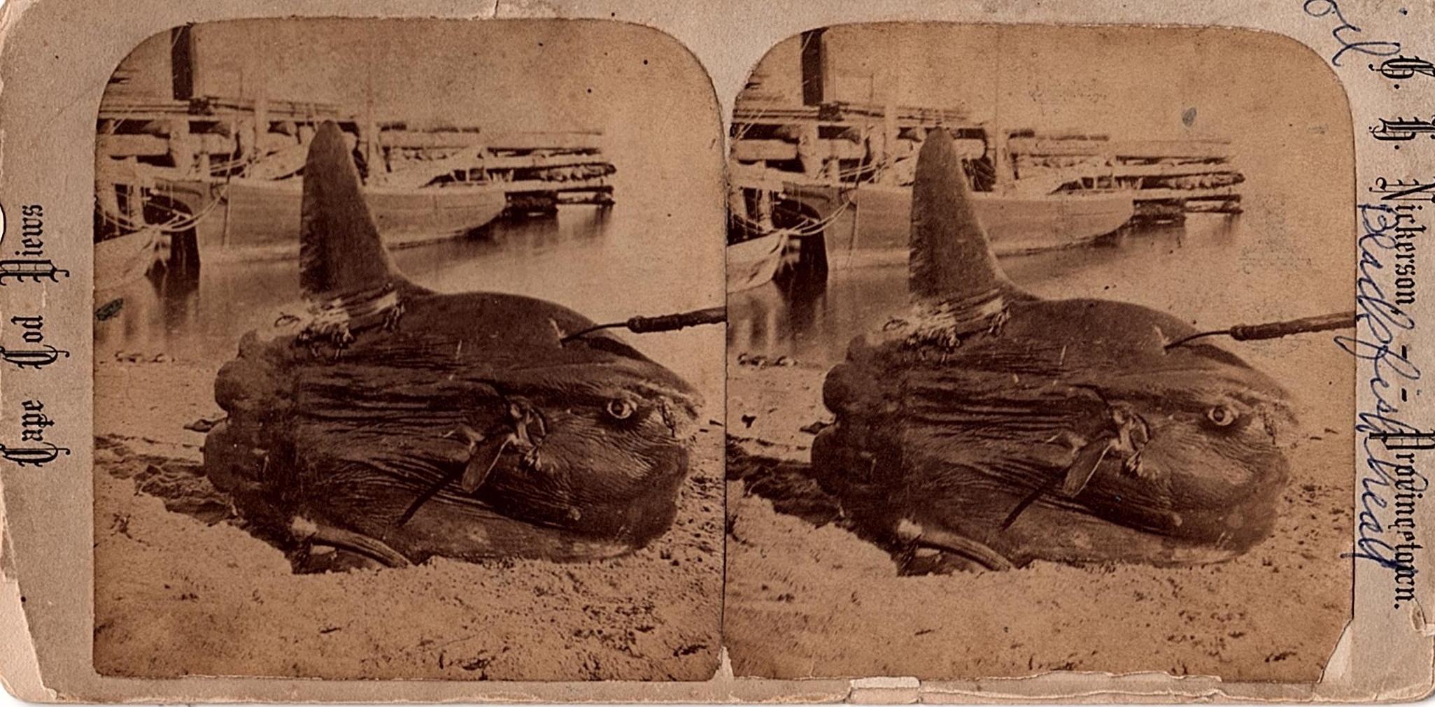 stersunfish.jpg
