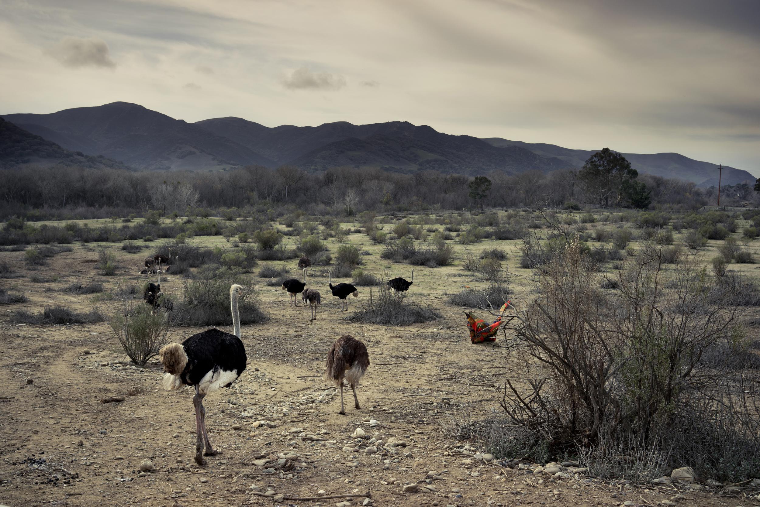 The Herd (2016)