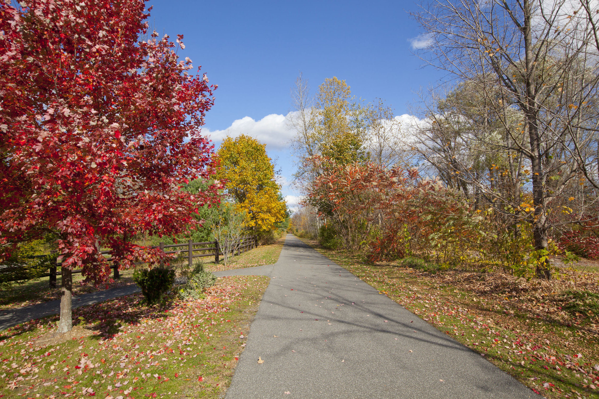 trail in autumn.jpg