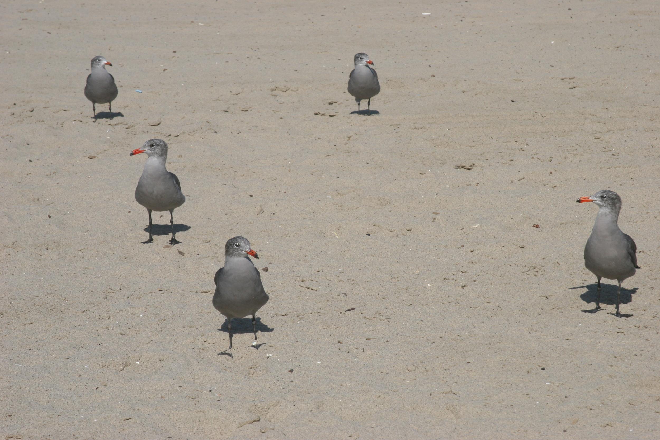 3.birds.JPG
