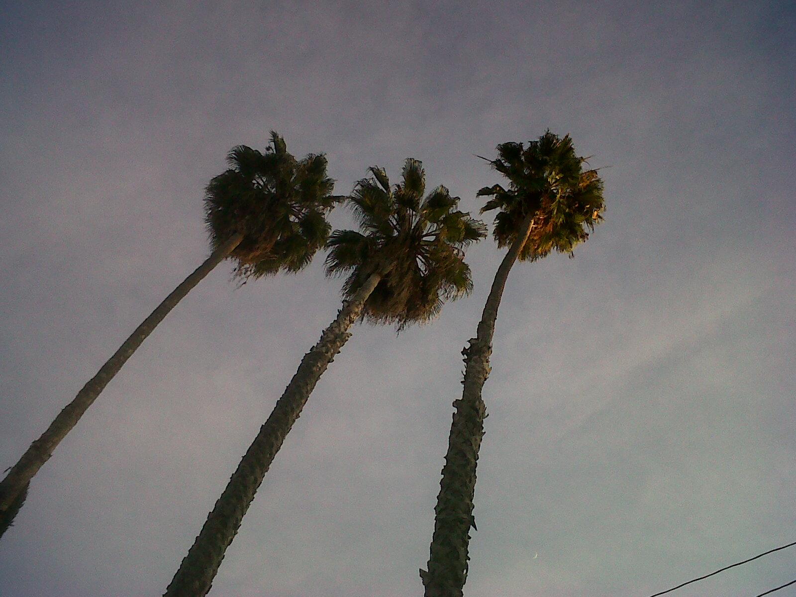 11.three.palms.jpg
