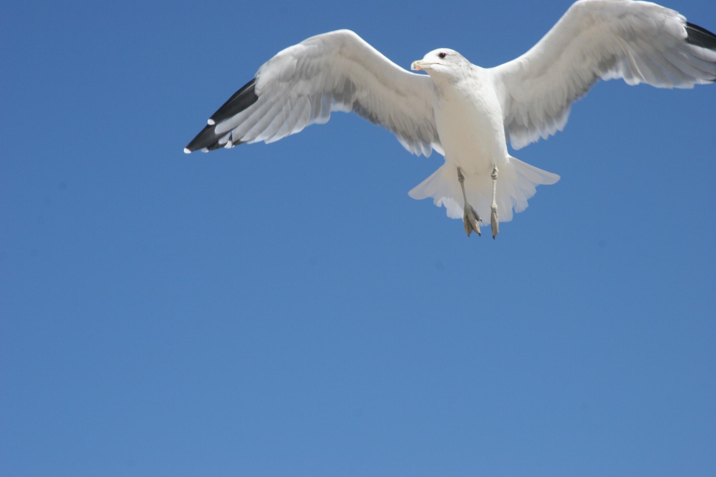 25.seagull.JPG
