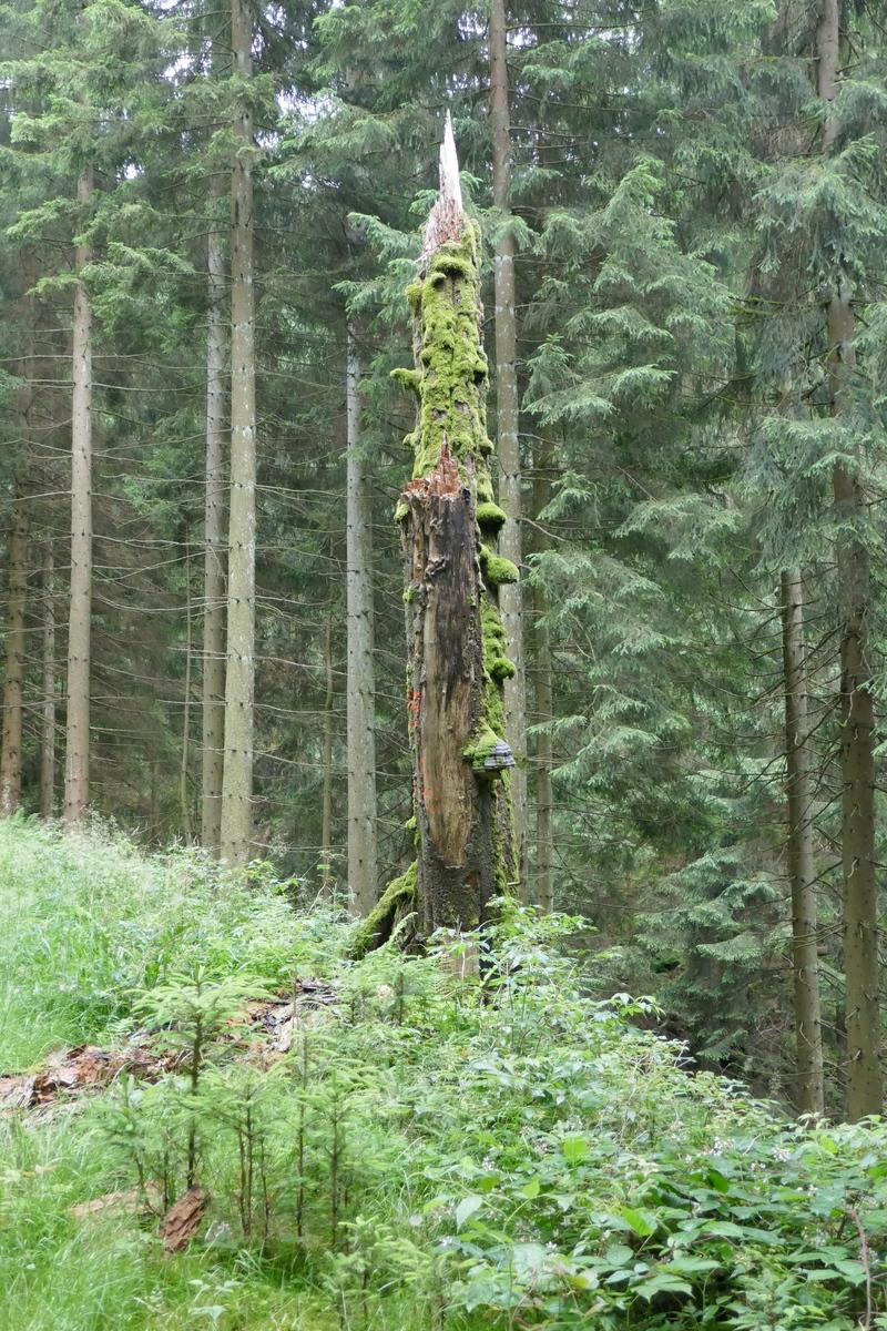 Vermooster Baum