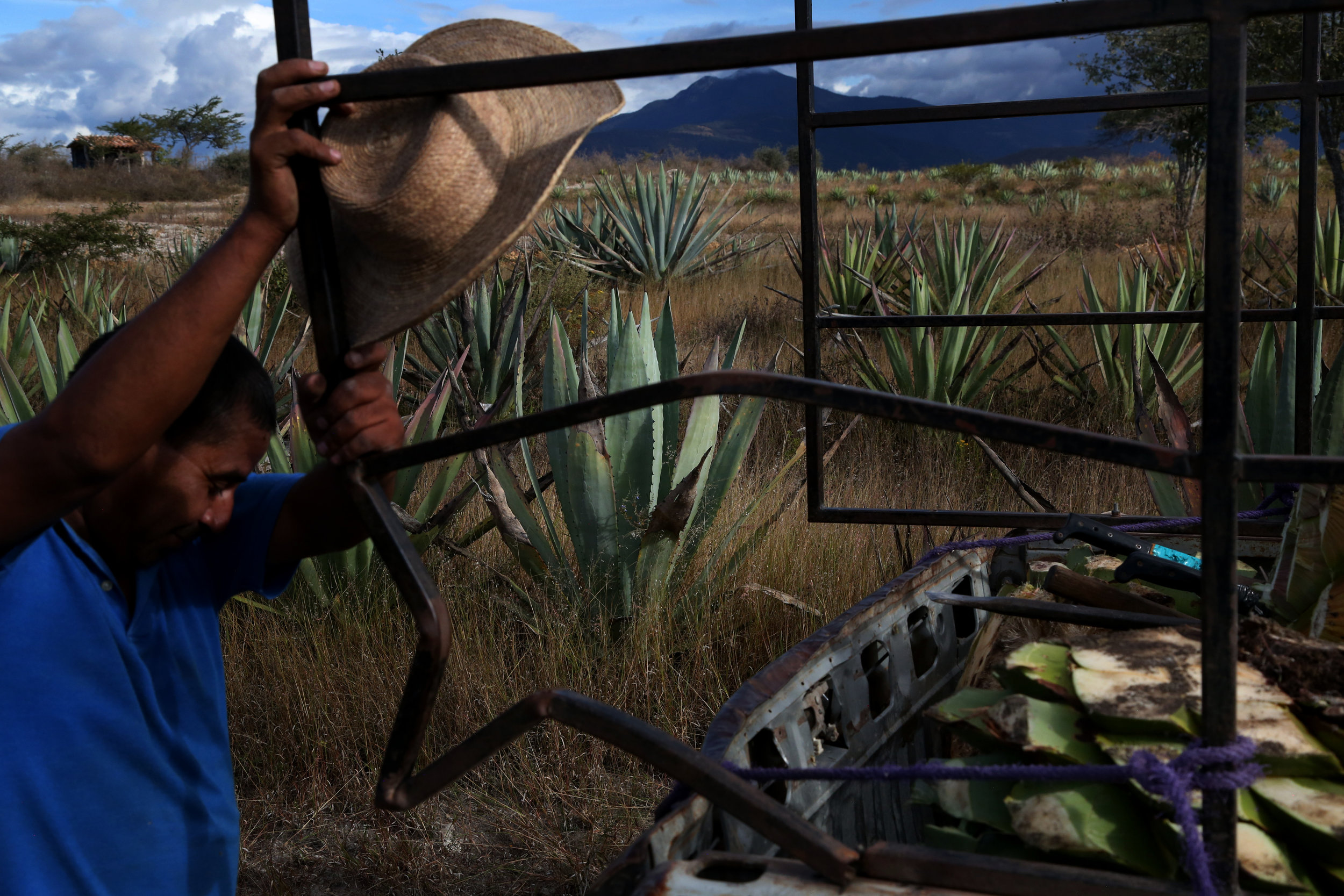 Pedro Reyes wipes sweat from his brow after a day of harvesting agave near  Mihuatlan, Oaxaca.