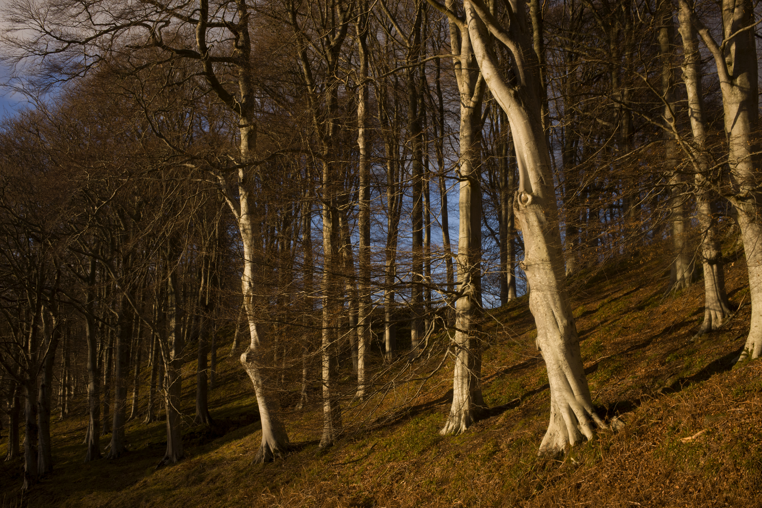 The woods on the Balindalloch Estate,