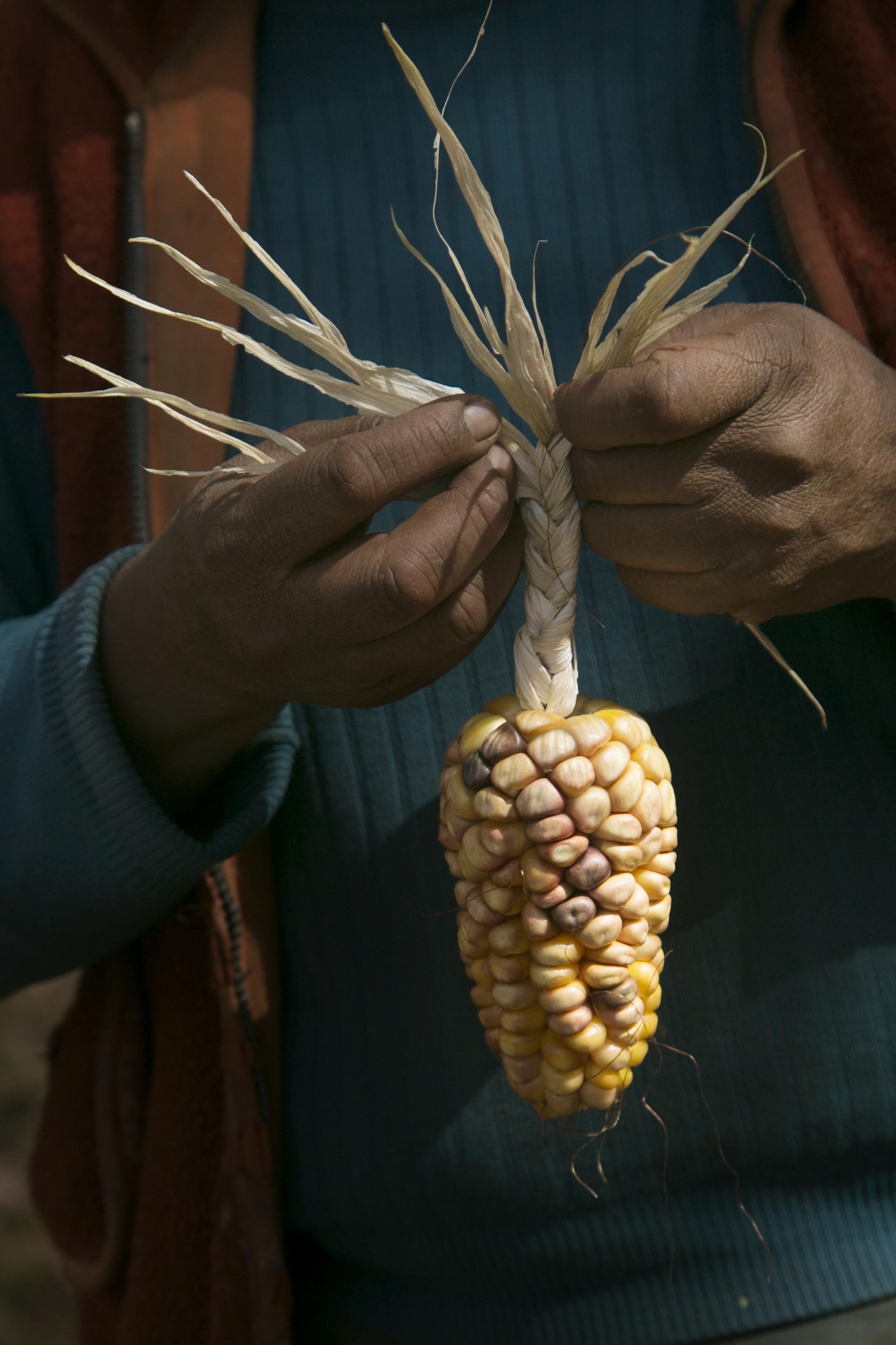 Claudia Carihuman braids a corn husk so that she can hang and dry it.