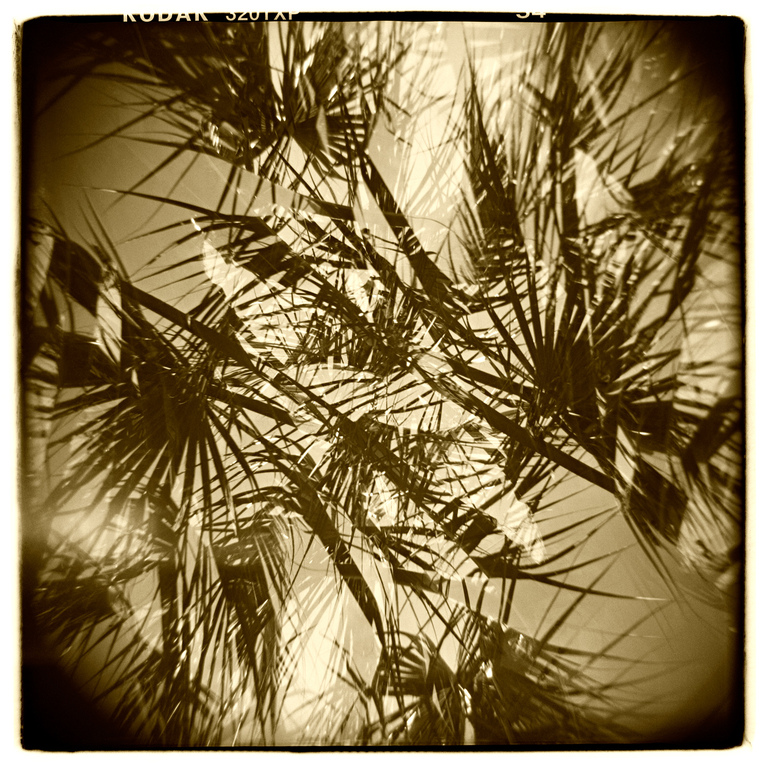 """""""Palm Study"""" H1421 (In-camera Double Exposure)"""