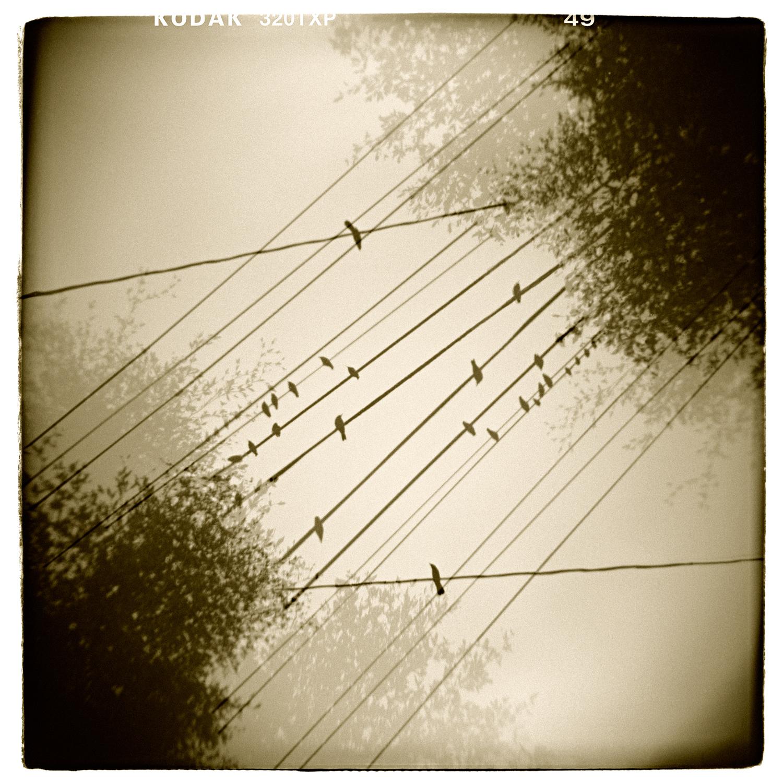"""Avian Etude"" H1494 (In-camera Double Exposure)"