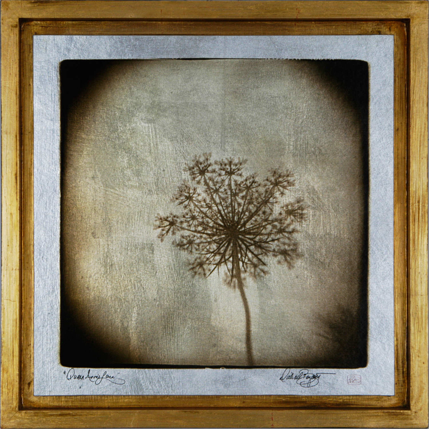 """""""Queen Anne's Lace"""" 17"""" x 17"""" $349 FW01"""