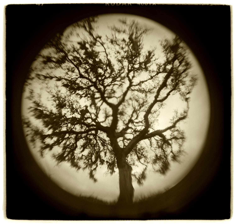 """Tree Study"" H1503"