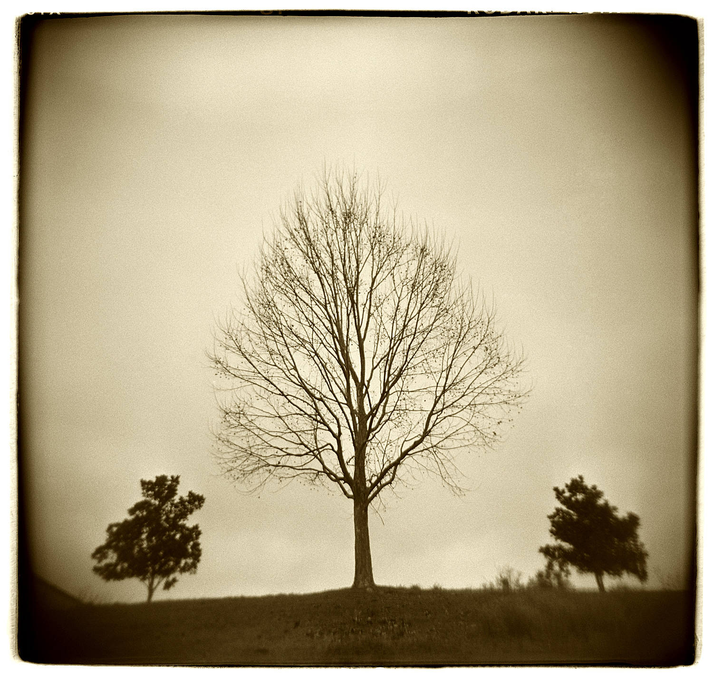 """Tree Study"" H1505"