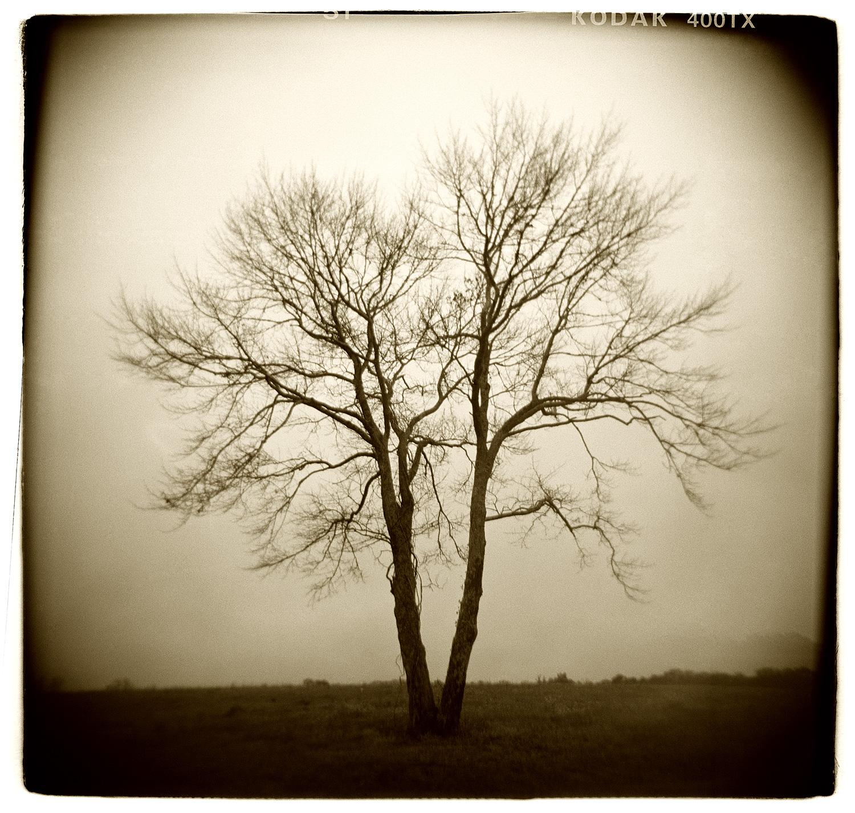 """Tree Study"" H1506"