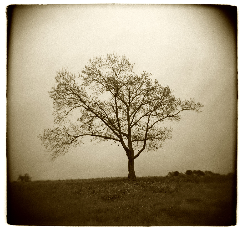 """Tree Study"" H1507"
