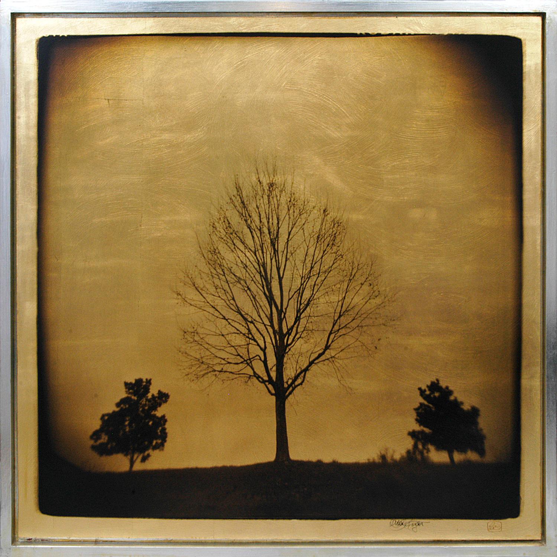 """Tree Study"" 36""x36"" FW07 $1800"