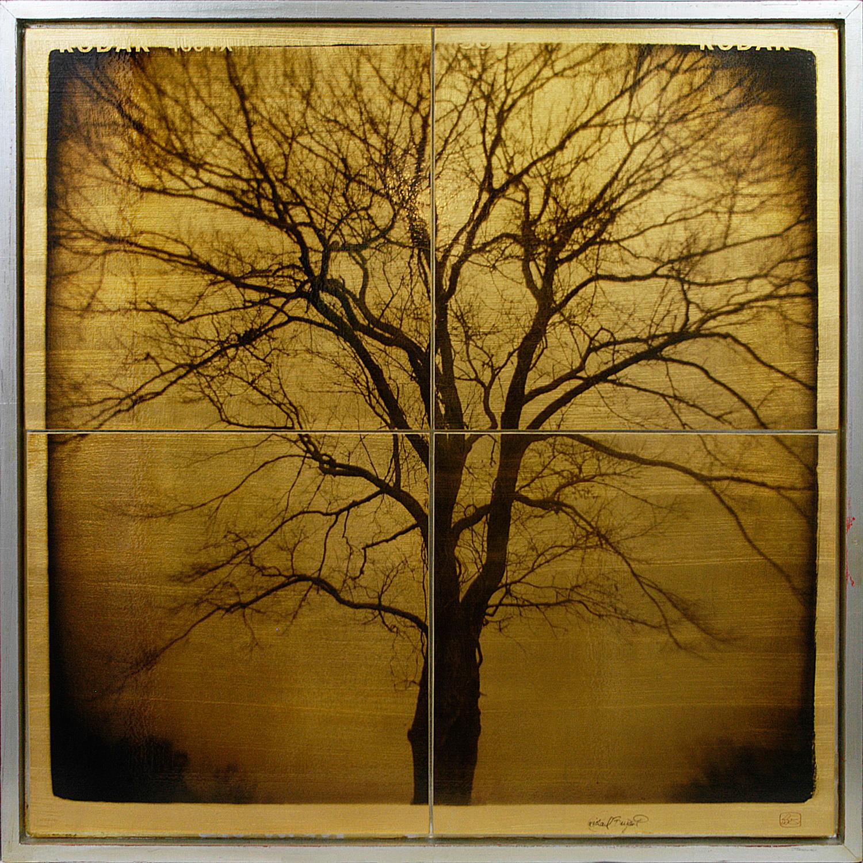"""Tree Study"" 32""x32"" FW08 $1500"