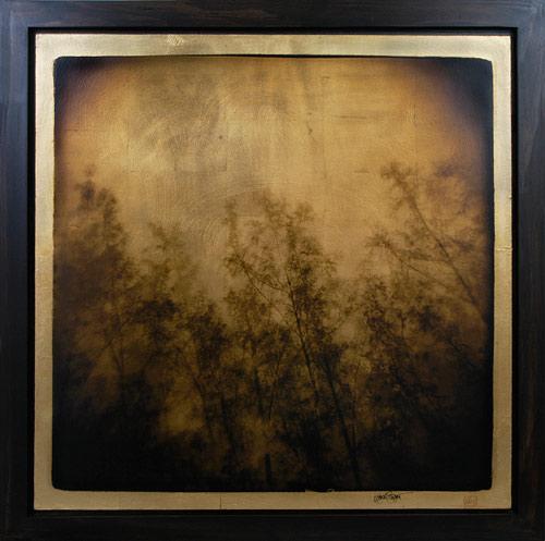 """Pine Study"" (In-Camera Triple Exposure) 30""x30"" FW11 $1500"