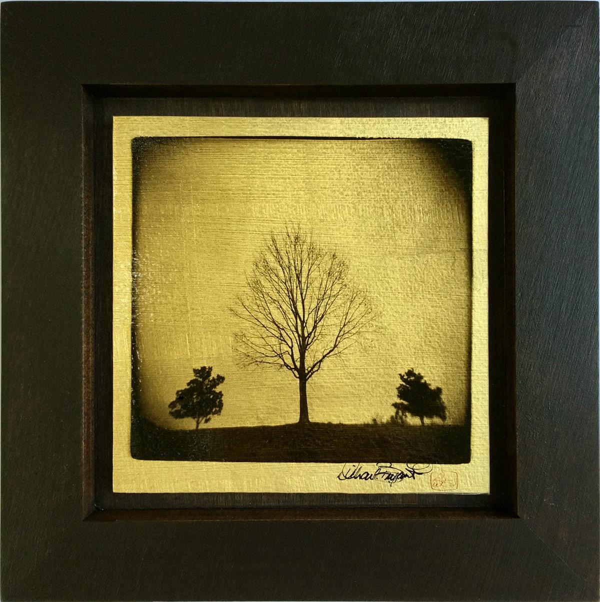 """Tree Study"" 10""x10"" FW12 $99"