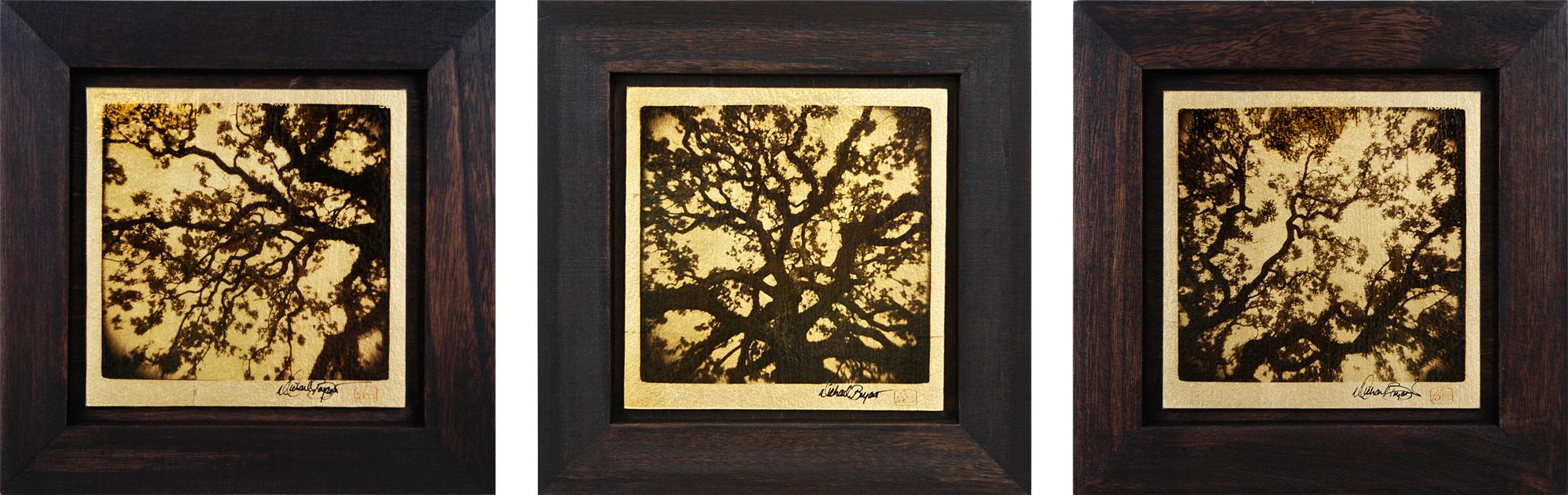 """""""Live Oak"""" (Set of 3) 10""""x10"""" FW18 $275"""