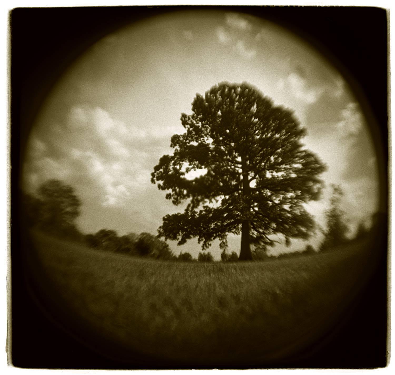 """Tree Study"" H1806"