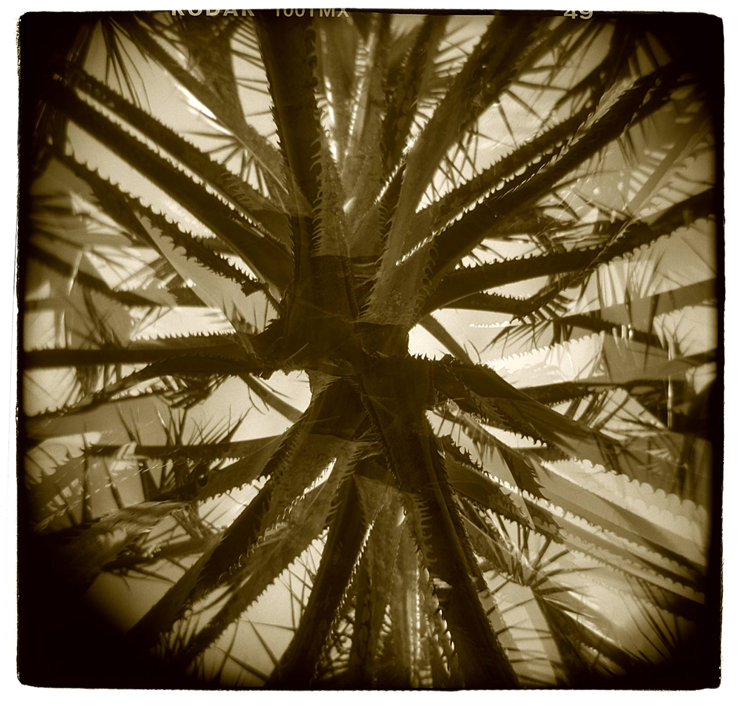 """""""Palm Study"""" (Double Exposure) H1804"""