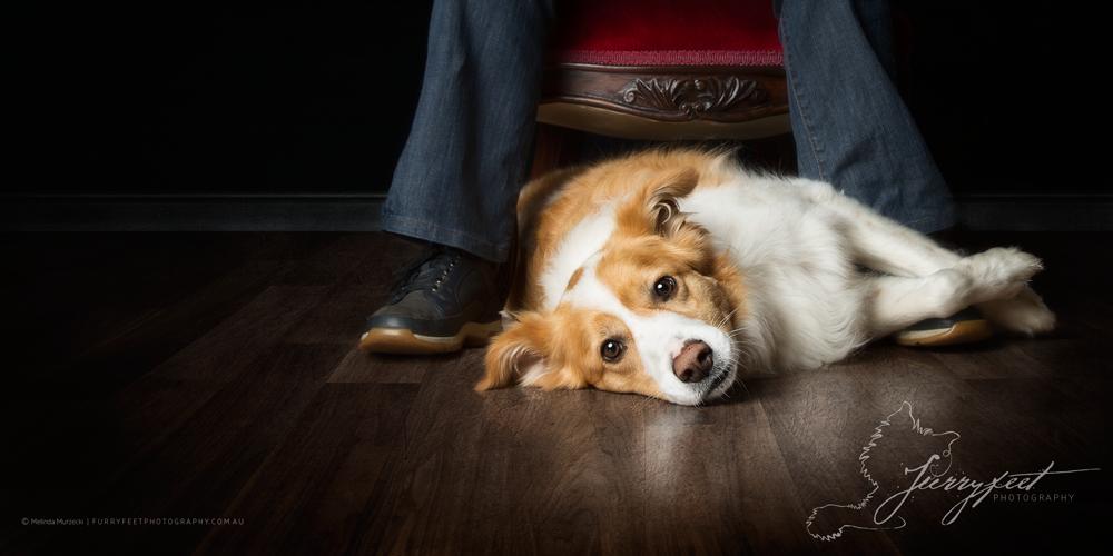 ©mmurzecki-FurryFeetPhotography-Bob