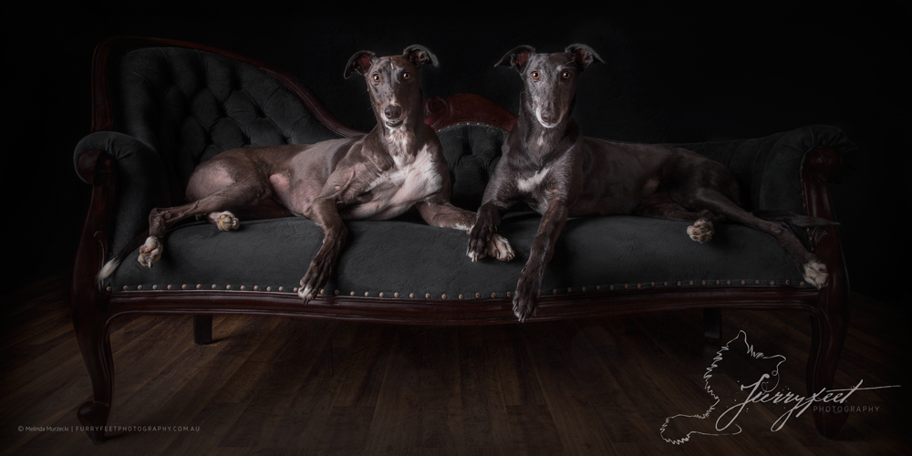 ©mmurzecki-FurryFeetPhotography-Ruby&Reggie