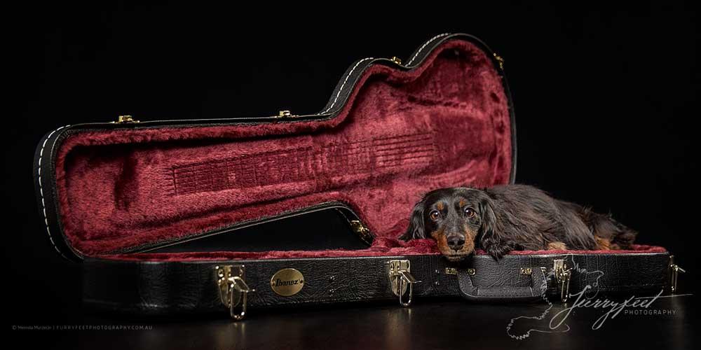 ©mmurzecki-FurryFeetPhotography-Woofers