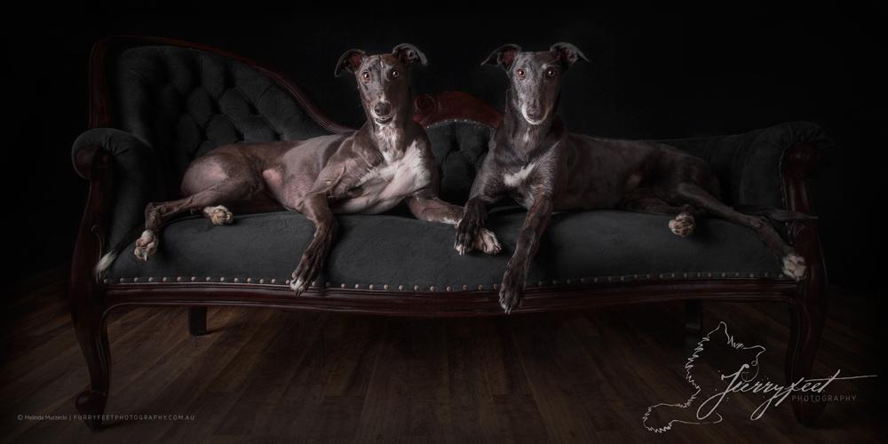 �mmurzecki-FurryFeetPhotography-Ruby&ReggiesKW
