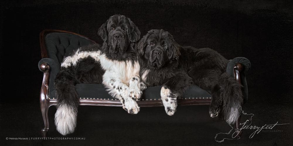 ©mmurzecki-FurryFeetPhotography-Murphy&Solomon