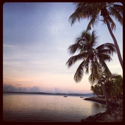 Fiji 2 trees.jpg