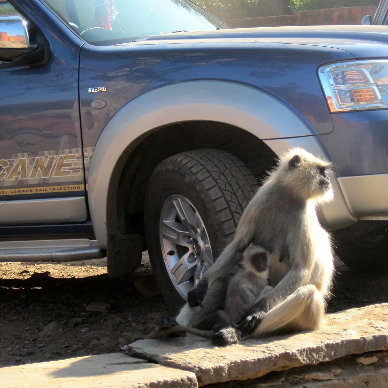 monkey car.jpg