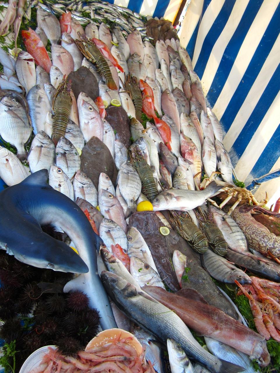 fish station.jpg