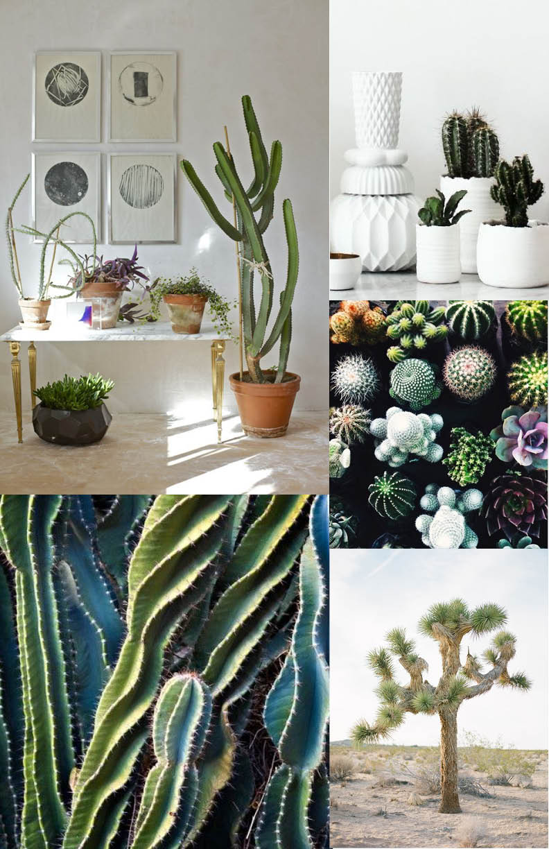 Oh how I love cacti, so sculptural, so dangerous...