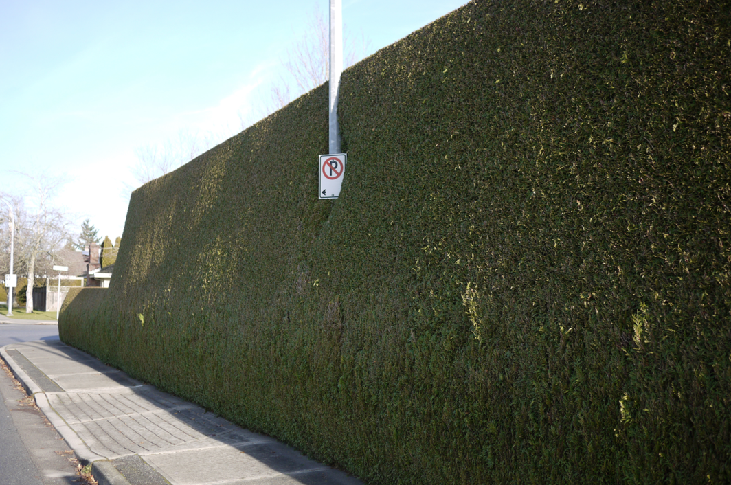 hedge4.png