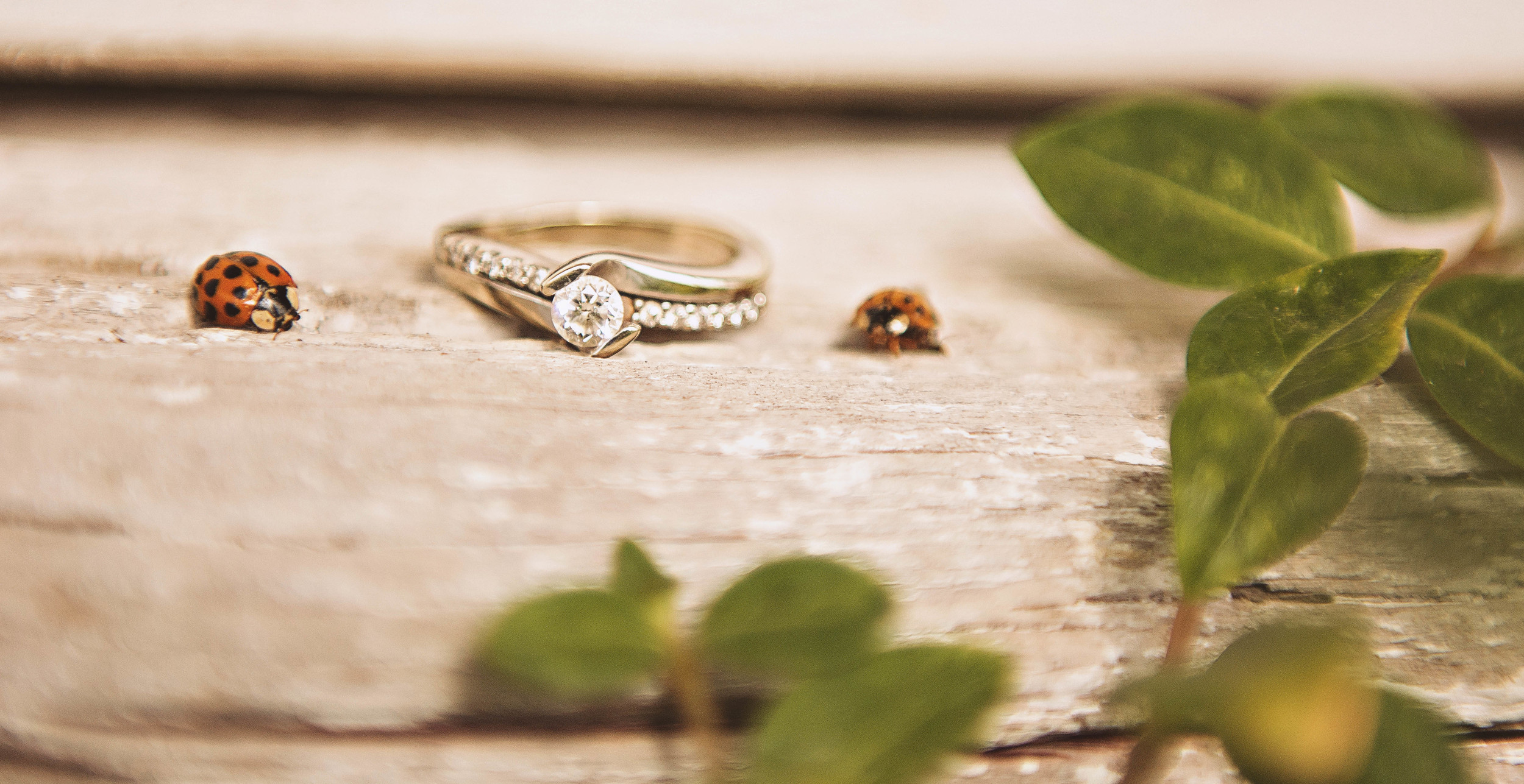 Milestone Barn Michigan Wedding Photographer Ring Shot