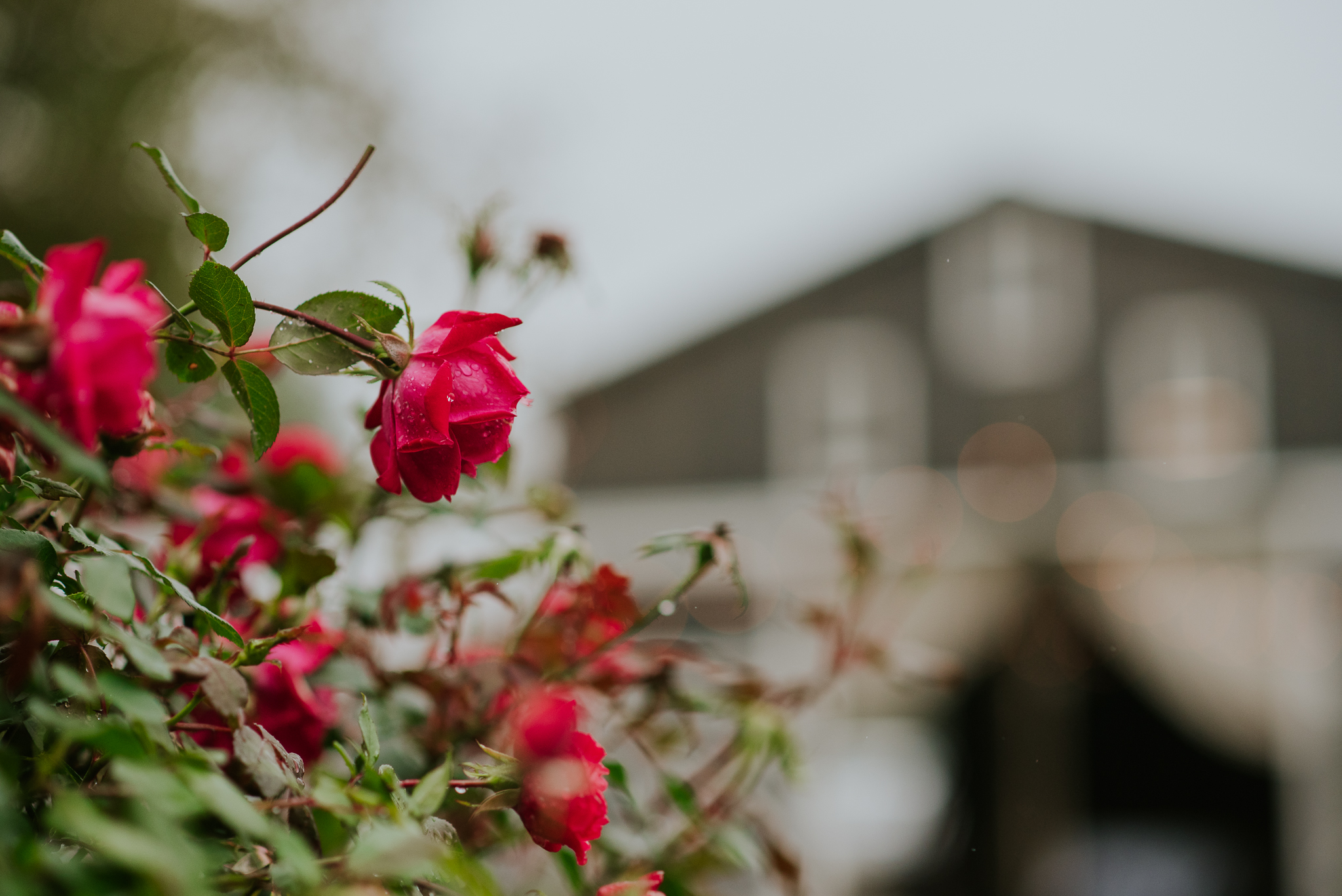 Something Blueberry Barn | Bangor, MI | Miss Lyss Photography | www.misslyssphotography.com