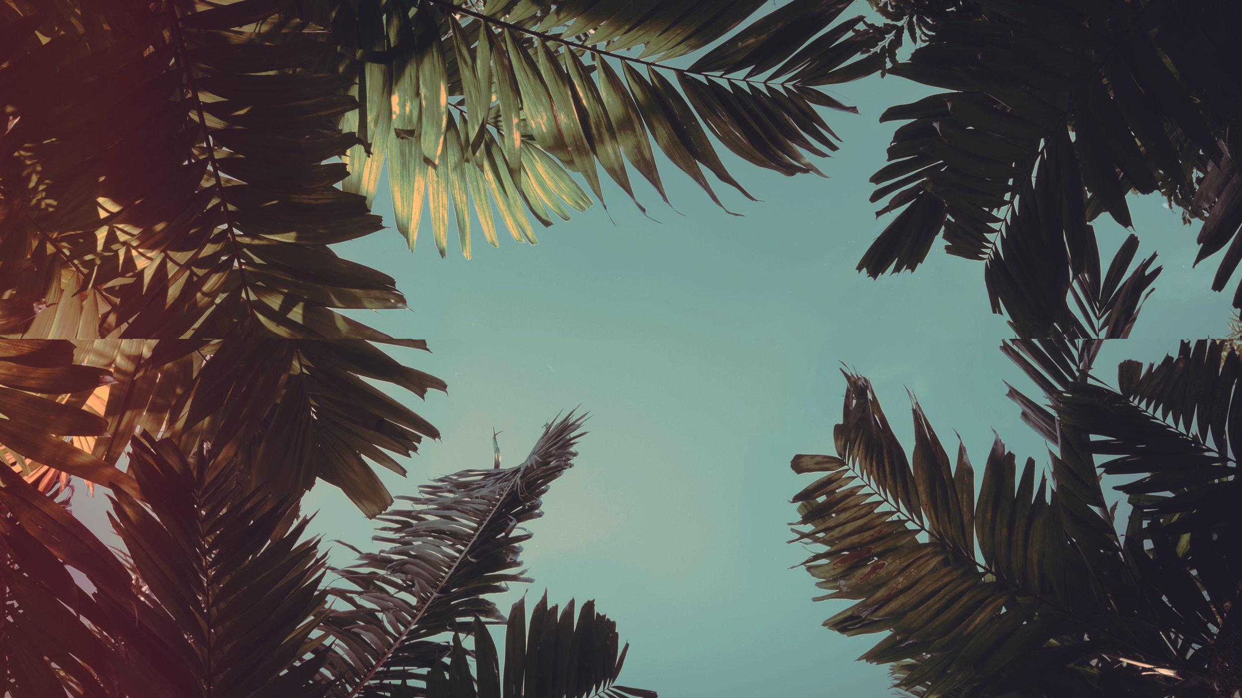 palm_sunday-PSD.jpg