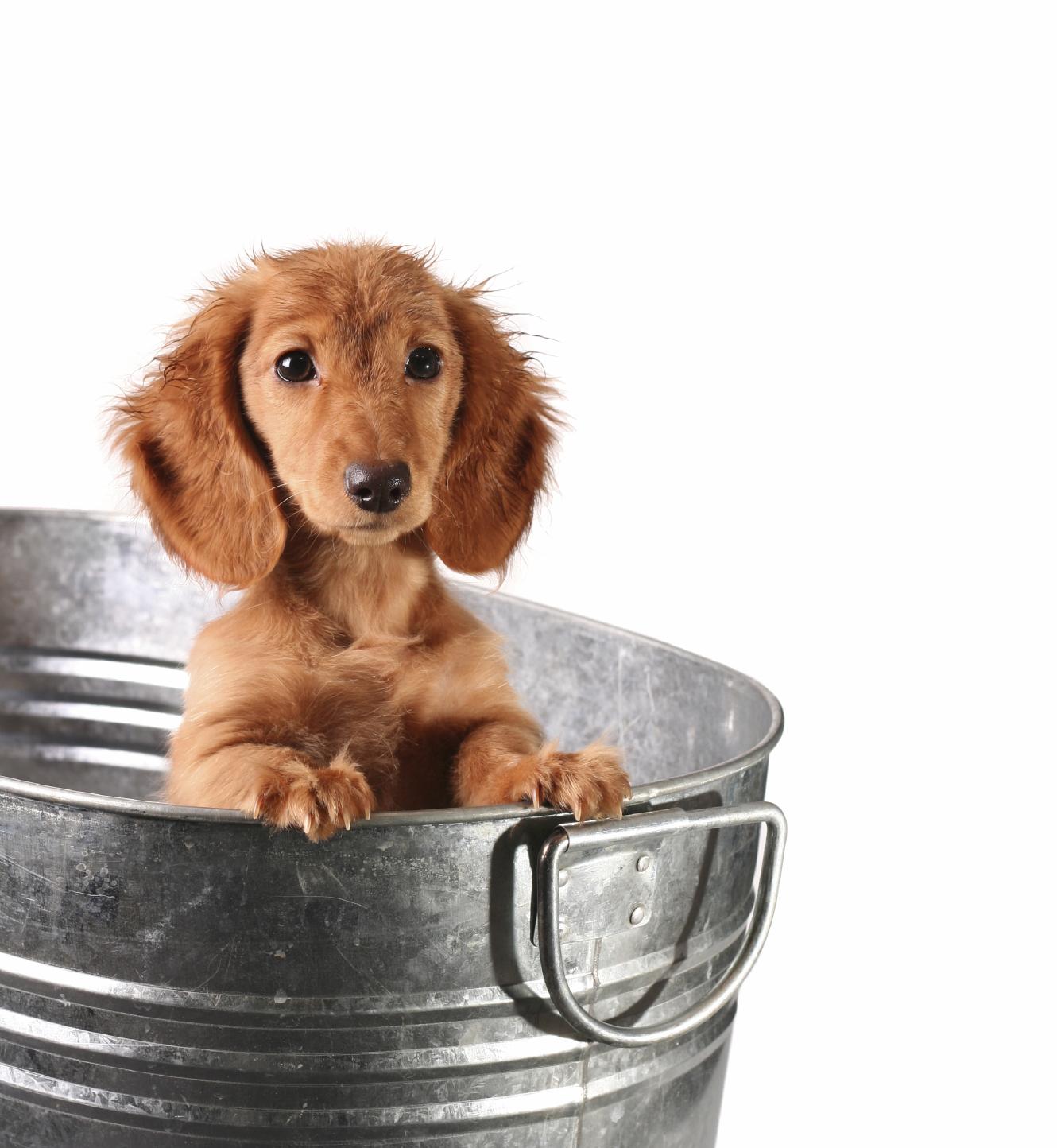 Erins_Pampered_Pets_Dog_Bucket