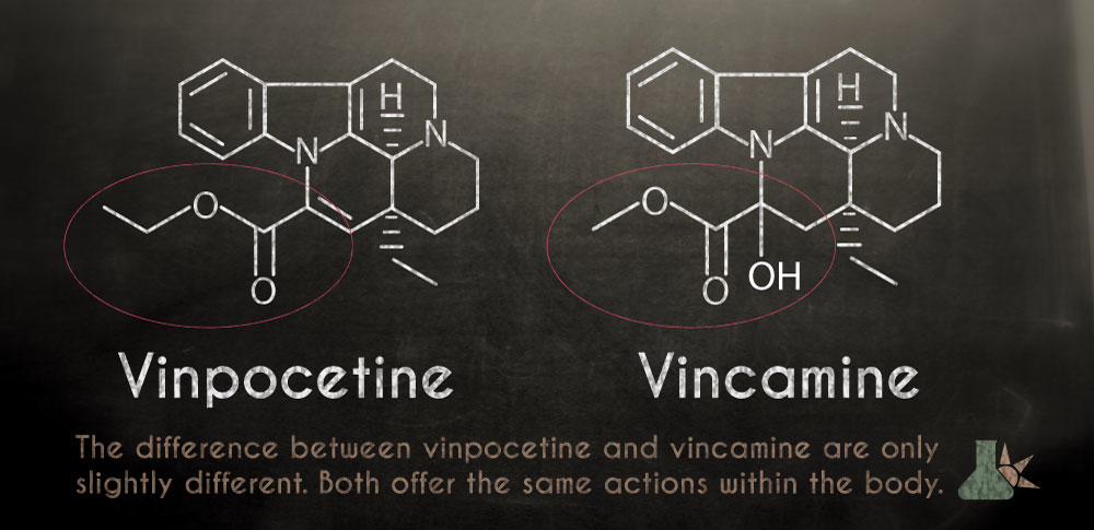 Vincamide and its synthetic counterpart vinpocetine from the periwinkle plant.