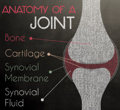 The Anatomy of a joint