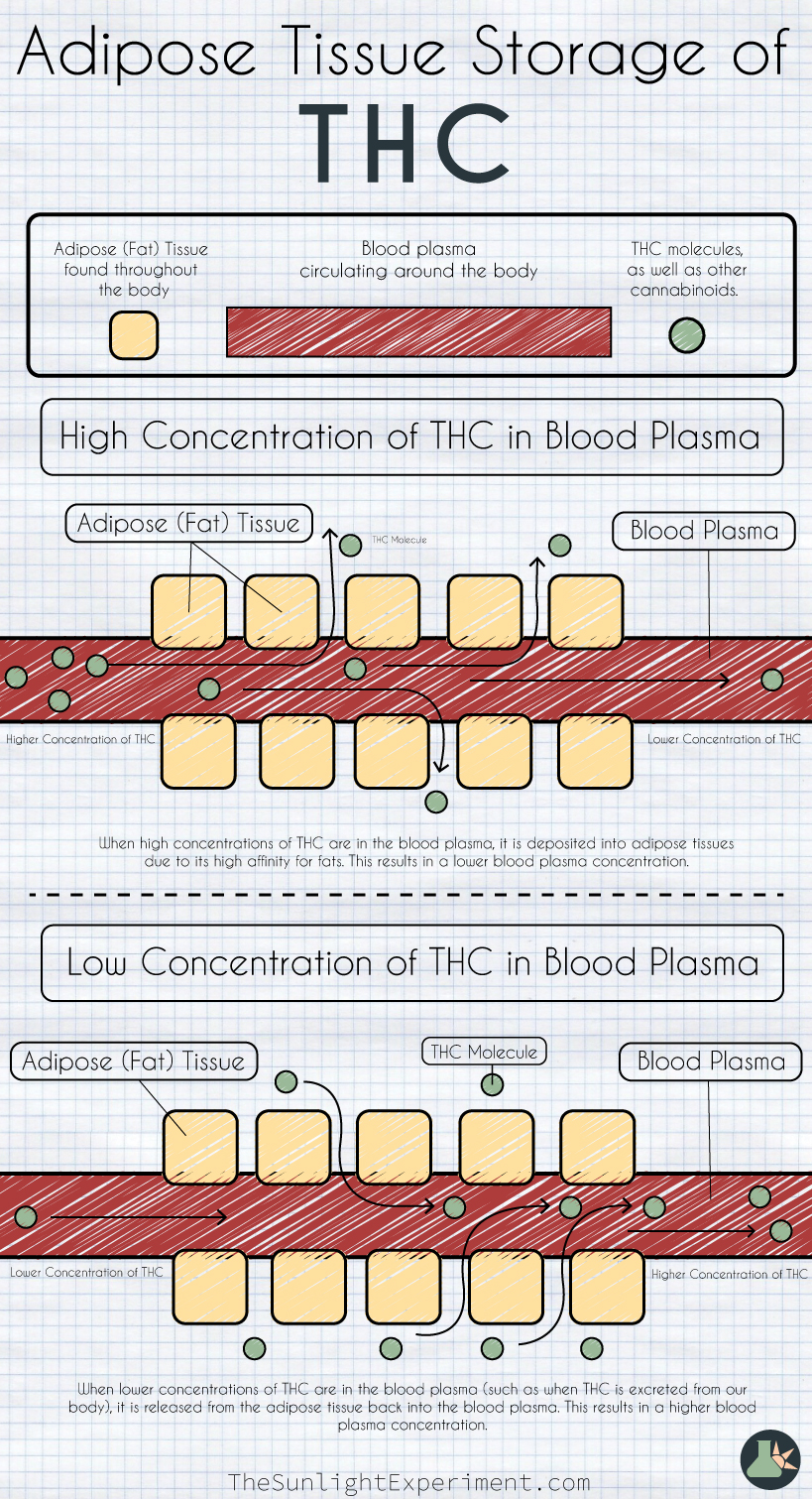 Adipose tissue storage of THC