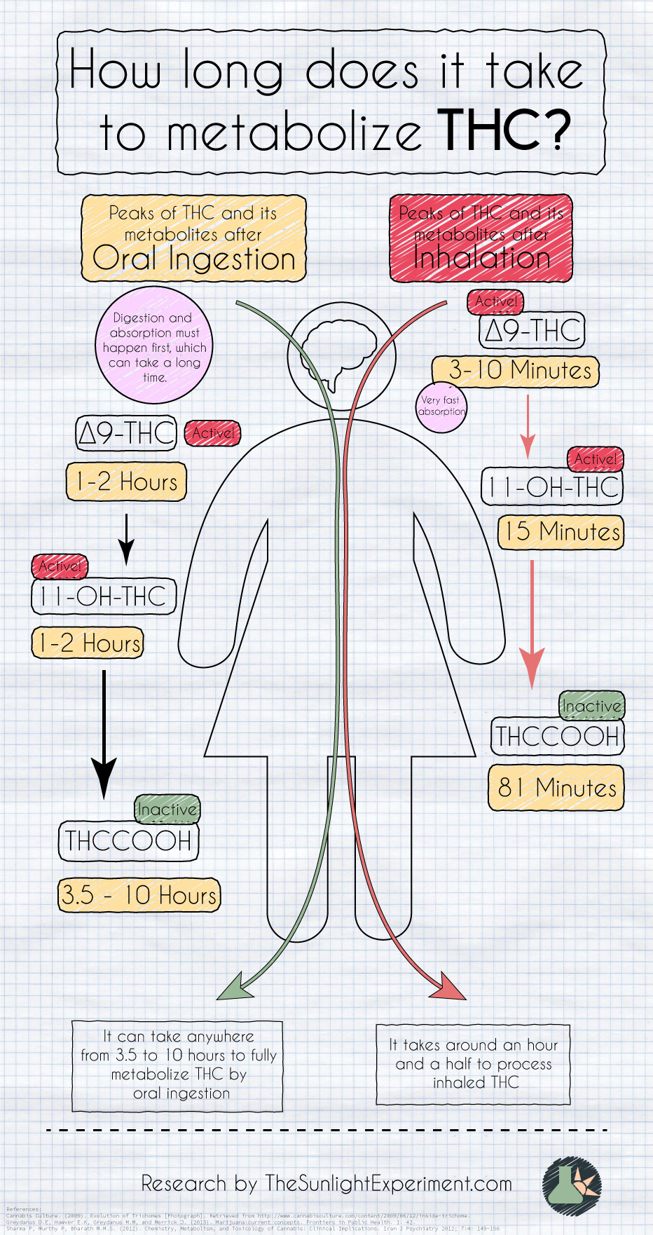 How long it takes to metabolize thc infographic