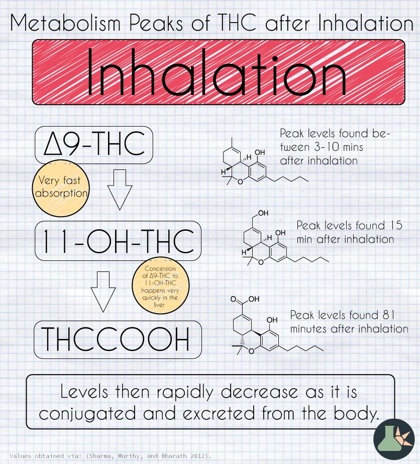 THC metabolism inhalation