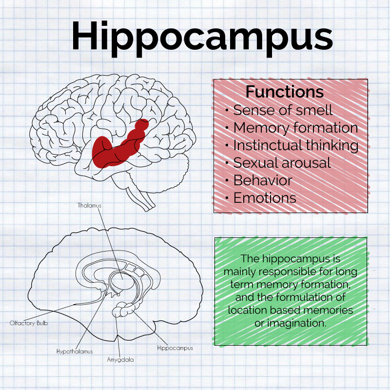 The hippocampus card