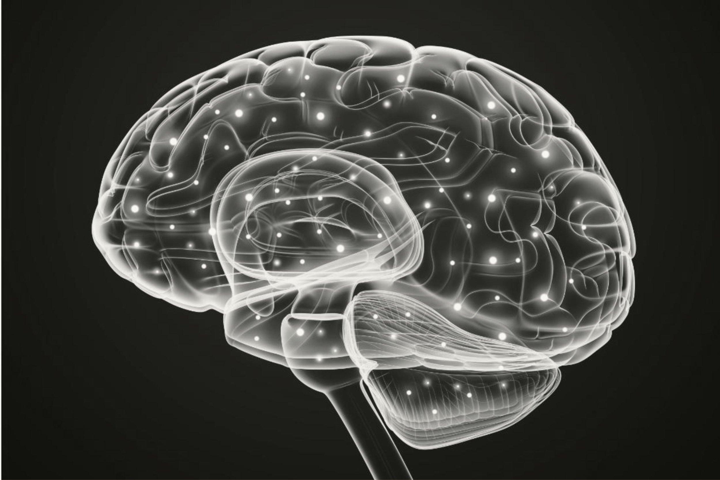 brain black and white